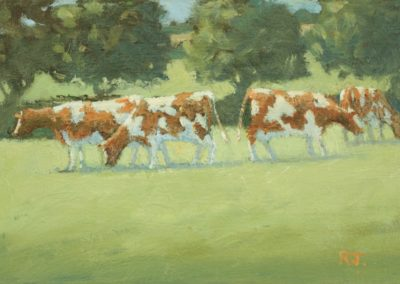 Cows, Brittany
