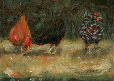 Hens, Brittany