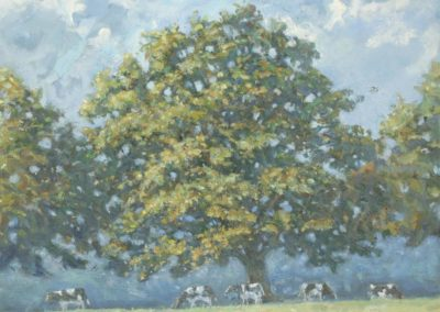 Oak Tree, Cows