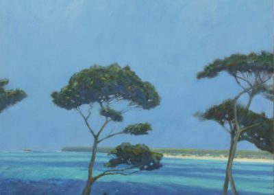 Pine Trees, St Ives Bay