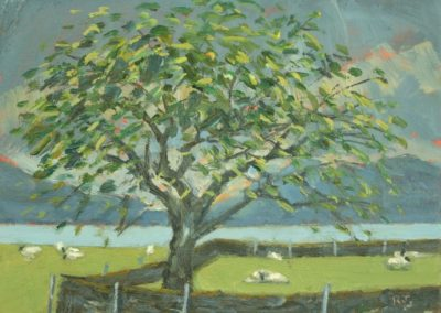 Sheep and Cherry Tree, Appin Farm