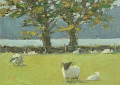 Sheep Farm, Appin