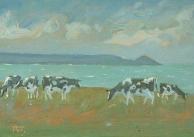 Towards Rame – Cows