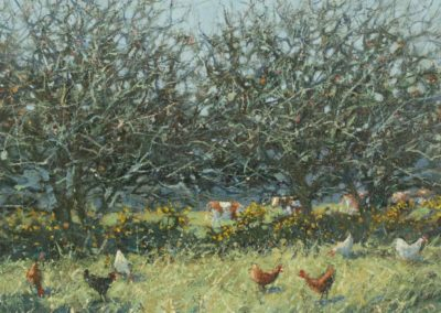 Winter Trees and Chickens
