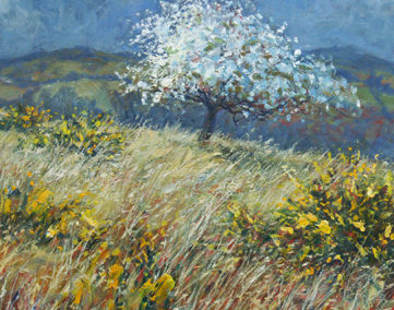 Blackthorn Blossom & Gorse II