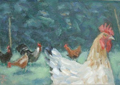 Chickens, Trewhella Farm