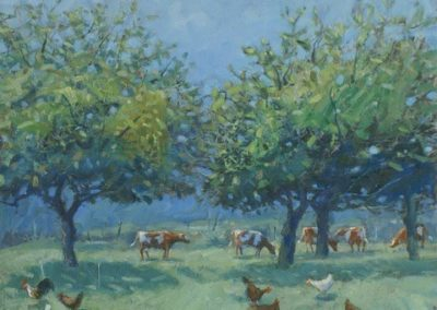 Summer Orchard, Chickens & Cows