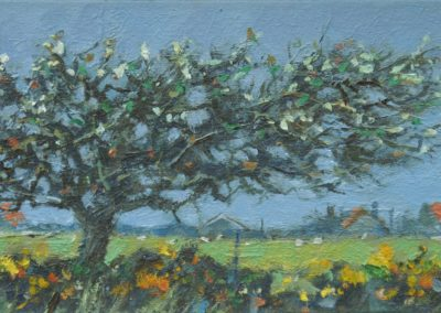 Windblown Blackthorn 3